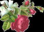 Rose Victorienne(элементы)  24