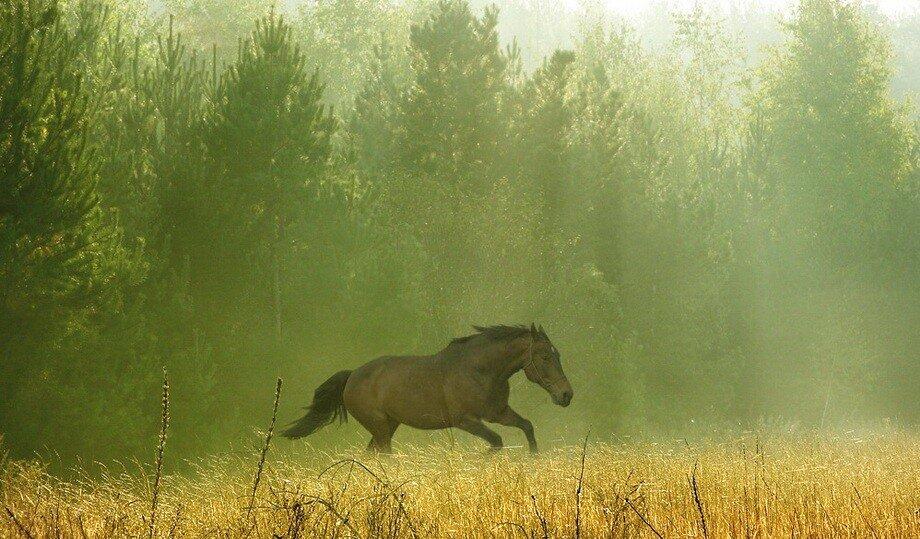 Фотопейзажи Вадима Трунова