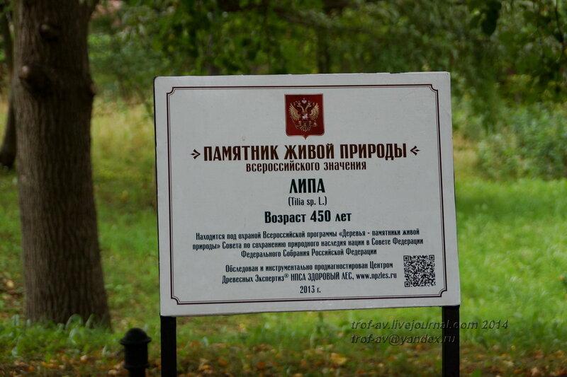 500-летние липы. Светлогорск-Rauschen