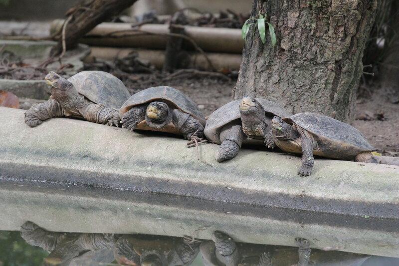 3оопарк в Куала-Лумпур