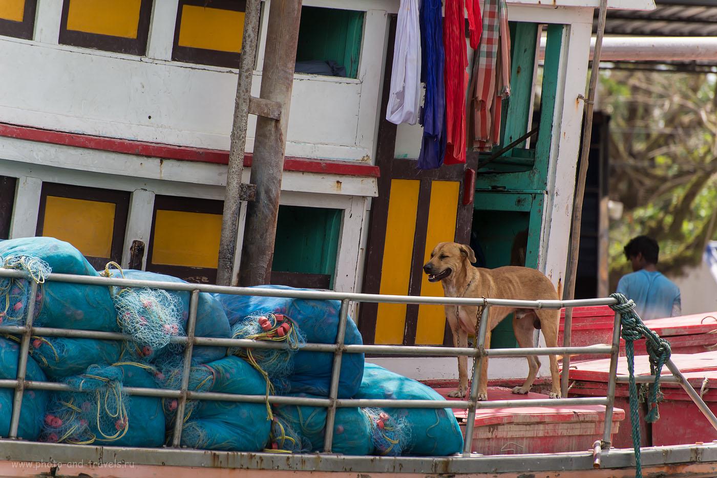 Фото 9. Рыбацкая деревня в Таиланде. Отзывы туристов о поездке на машине. Экскурсия в рыбацкую деревню по дороге из Чумпхон в Краби. Боцман (320, 240, 5.3, 1/800)