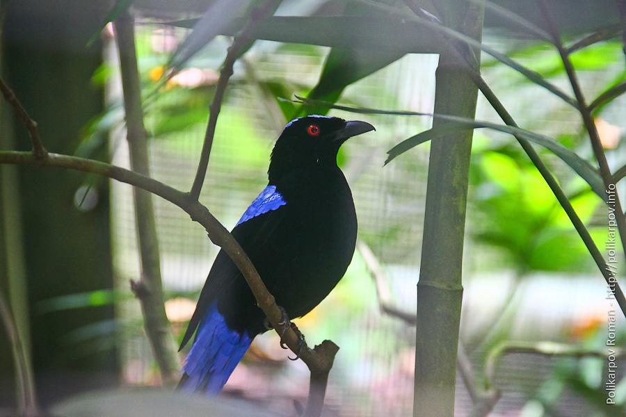 0 c4fa8 e32476d4 orig Парк птиц Jurong в Сингапуре