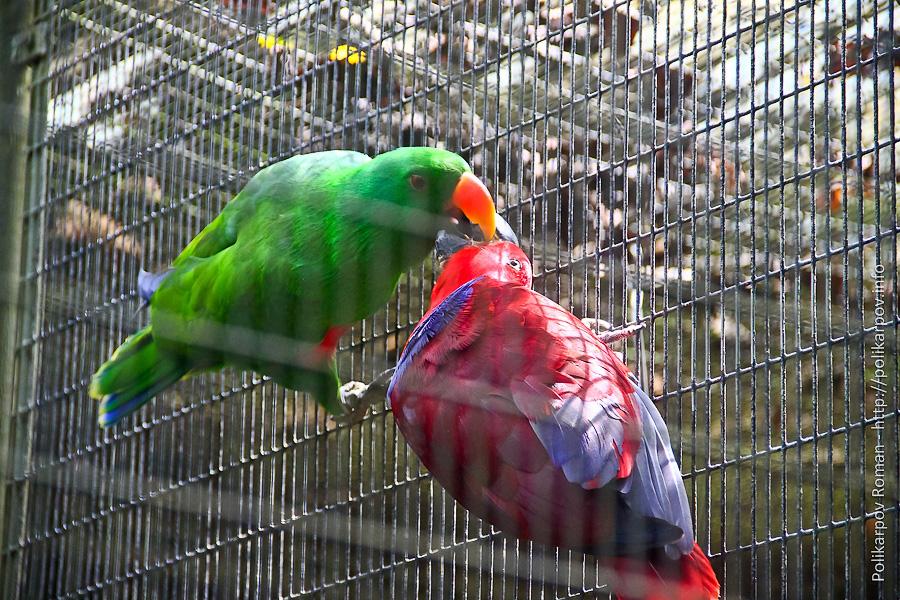 0 c4fbb 62b33a9 orig Парк птиц Jurong в Сингапуре