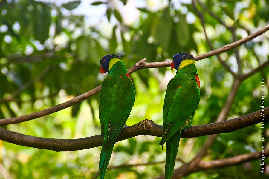 0 c4fd2 9ae23af5 orig Парк птиц Jurong в Сингапуре