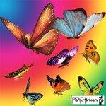 1263819903_080118aeclipartbutterflies.jpg