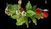 Клипарты с цветами