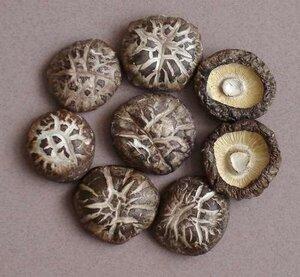 шиитаки грибы