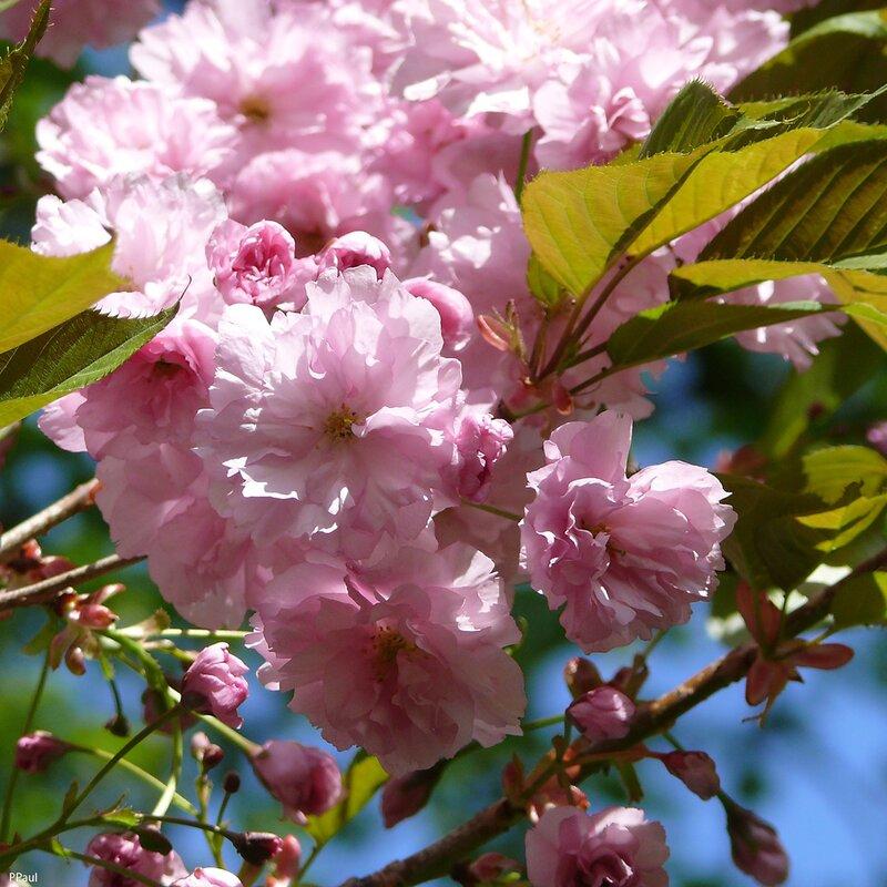 весна в Карловых Варах