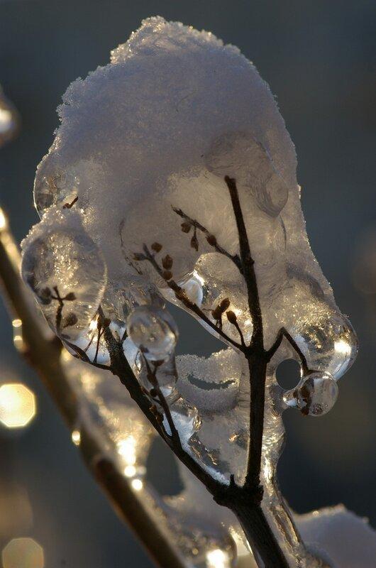 веточка во льду и в снегу-2