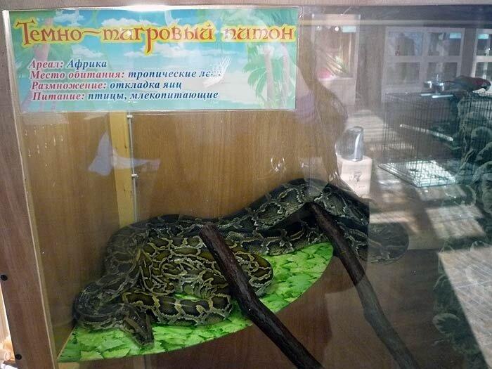 Зоовыставка во Владивостоке - питон