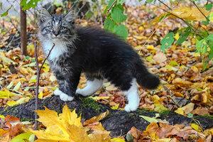 Котёнок в осени