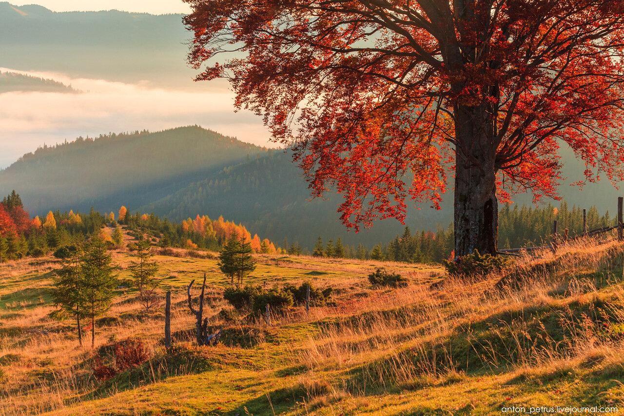 Карпаты. Осенний пейзаж