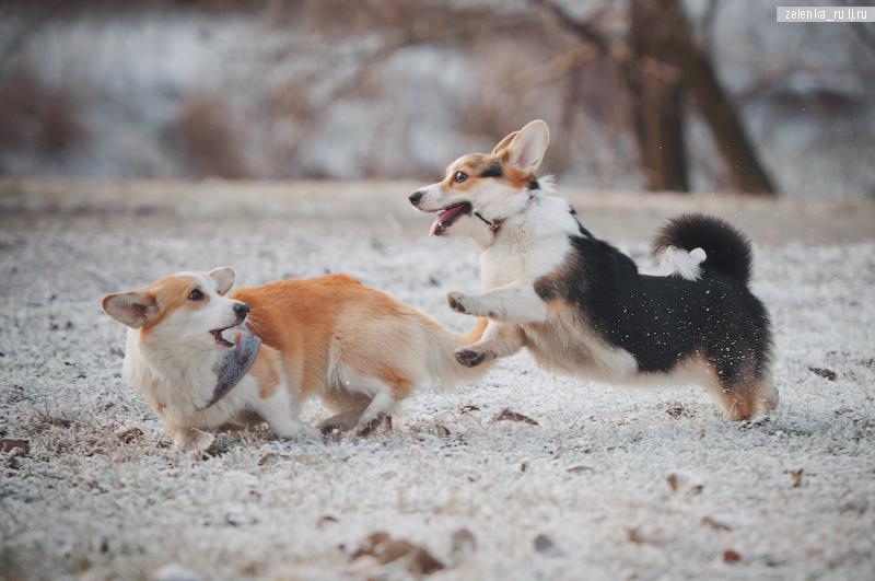пофотографирую Ваших собак! - Страница 5 0_16986d_7e9dd8d1_orig