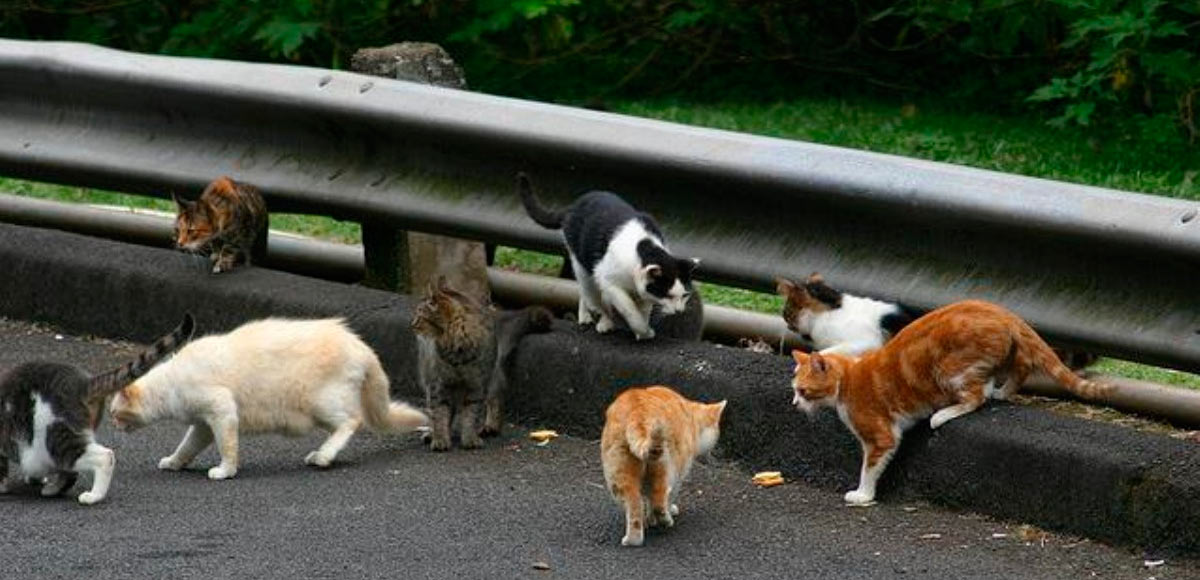 уличные кошки в россии