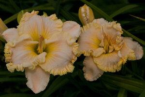 Лилейники в Саду Дракона летом 2011г 0_63753_3d8588c5_M