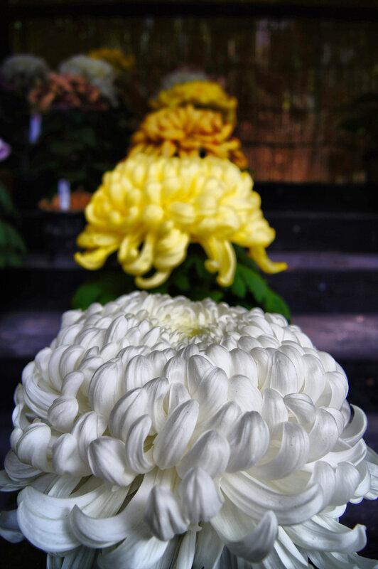 Парк СЭНГАНЪЭН - Цветы