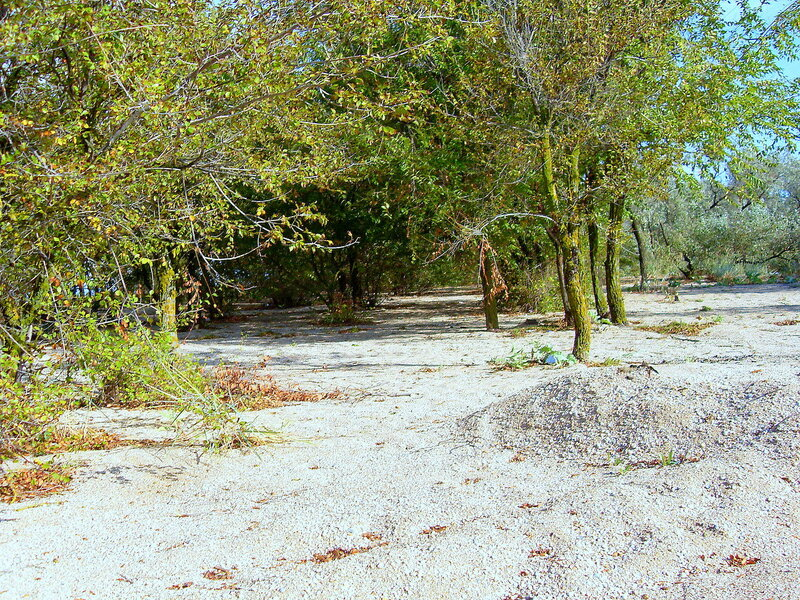 Лес на песках... SDC14775.JPG