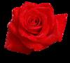 клипарт Розы