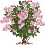 V~OLdEnglishRosebush.png