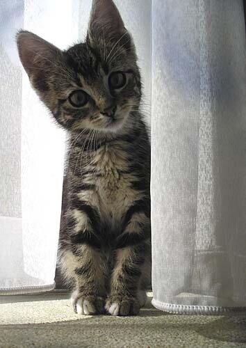 _m_u_ - котёнок пришёл в гости.jpg