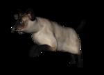 сиамские кошки (6).png