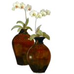 Orchids_vaas.png