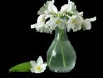 kTs_Bouquet_Senteur50.png