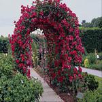 «Скрап -набор Мой сад» 0_5e1b3_7be4684a_S