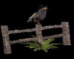 Птицы  разные  0_51c7f_5e2312cd_S