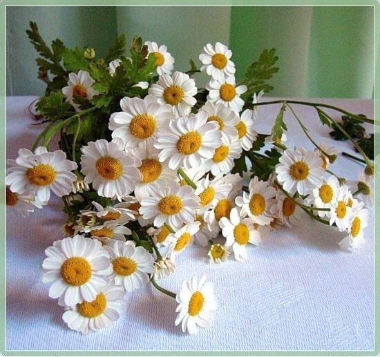 http://img-fotki.yandex.ru/get/4403/tat75091008.36/0_60137_1db3efea_-4-XL.jpg