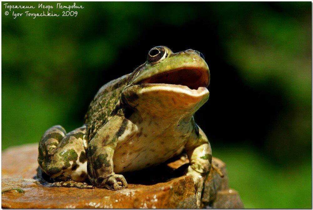 К чему снится спасать лягушку