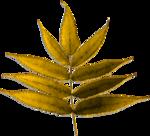 melc_FallSplendor_leaf01-co.png