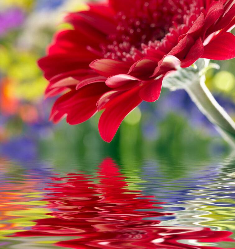 Картинки с надписями для тебя цветы, открытки сделать