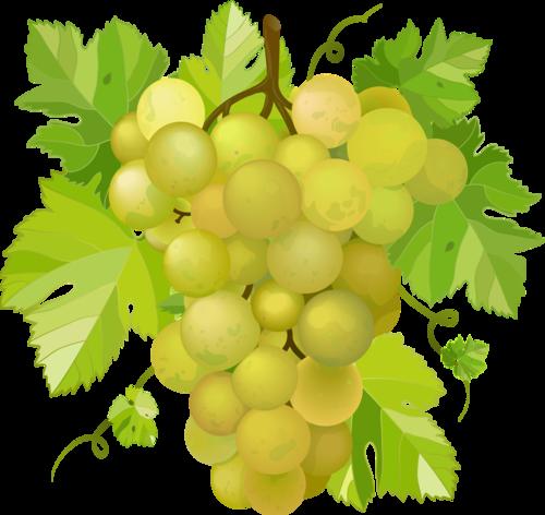 виноград (5).png