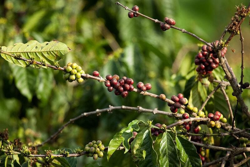 Кофе-4