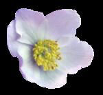 Purple charm_YalanaDesign (27).png