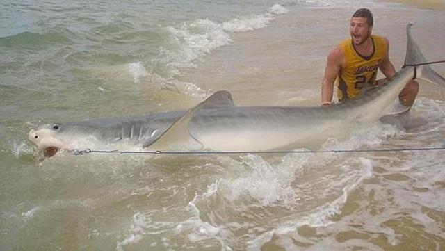 Австралиец поймал акулу голыми руками 0 e168f c5cb446d orig