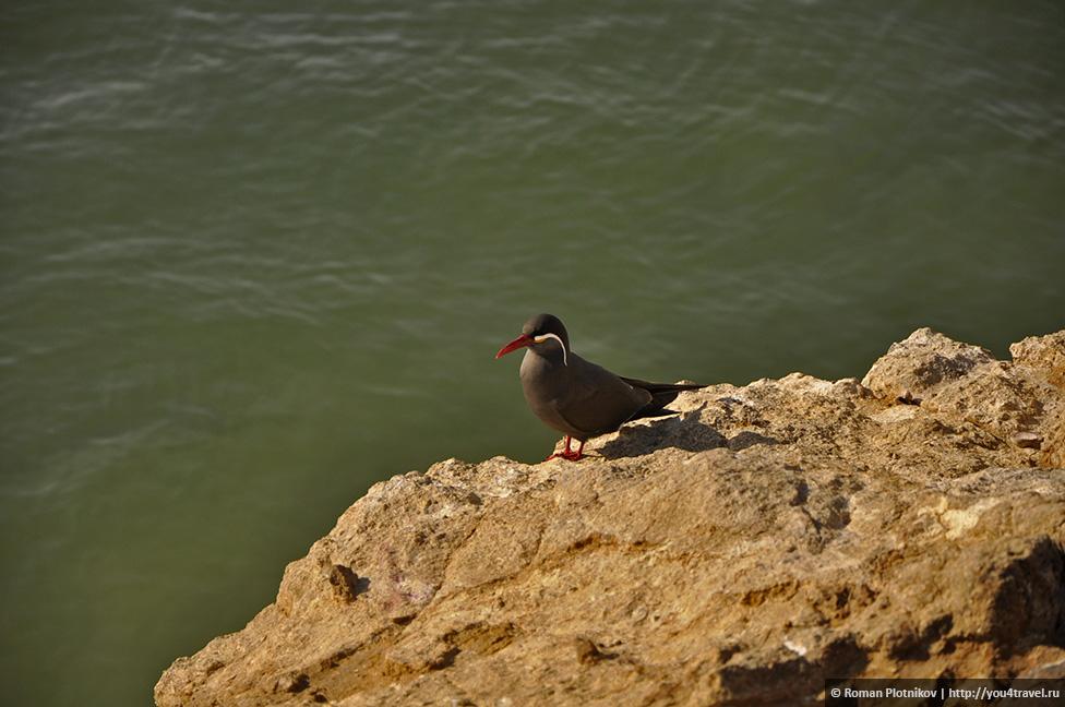 0 16173e 1dbf4a8d orig Национальный парк Паракас и острова Бальестас в Перу