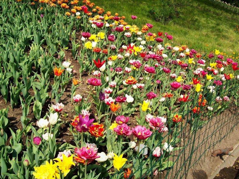 Выставка ранневесенних цветов 2011 года