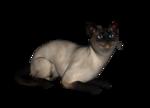 сиамские кошки (16).png