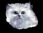 Кошки 5 0_509fd_4c09d4de_S