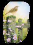 Птицы  разные  0_51c5f_9d0faad7_S