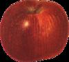 Яблоки 47