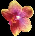 Орхидеи 50