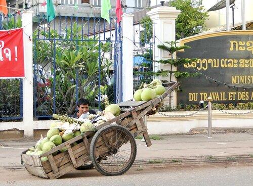 Кокосовая пальма - уже целое состояние!!!