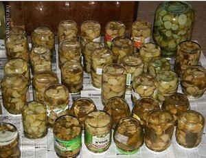 В Приморье у пенсионера украли 600 килограммов маринованных грибов