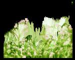 grass1.png