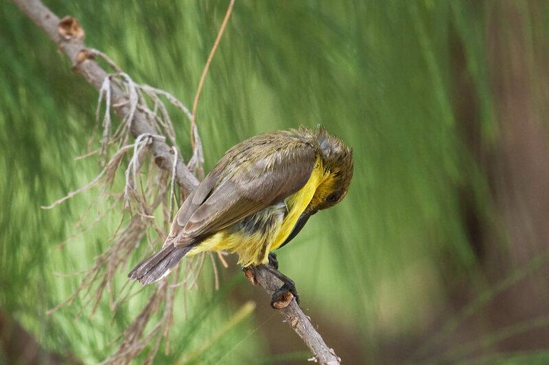 Чистка перьев