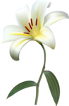 цветы-(252).png
