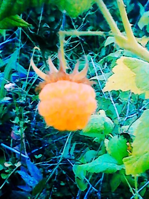 помидоры 033.jpg